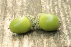 Two acorns Royalty Free Stock Images