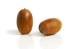 Two acorns Royalty Free Stock Photos