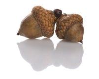 Two acorns Royalty Free Stock Photos