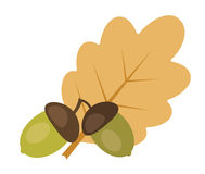 Two acorns and oak leaf Royalty Free Stock Photos