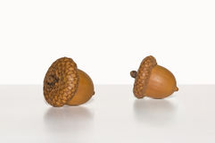 Two Acorns on white background. Macro shot of two acorns on a white background Royalty Free Stock Image