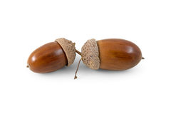 Two acorns Stock Photos