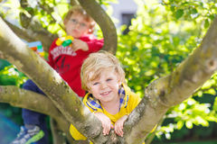 Two active little kid boys enjoying climbing on. Two active little blond kid boys enjoying climbing on tree. Toddler children learning to climb, having fun in Stock Photos