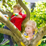 Two active little kid boys enjoying climbing on Stock Photography