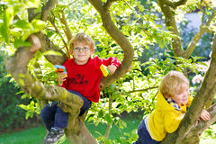Two active little kid boys enjoying climbing on tree. Two active little blond kid boys enjoying climbing on tree. Toddler children learning to climb, having fun Royalty Free Stock Images