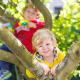 Two active little kid boys enjoying climbing on tree Stock Images