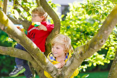 Two active little kid boys enjoying climbing on tree Royalty Free Stock Photography