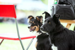 Two adoptable dogs outdoors Stock Image