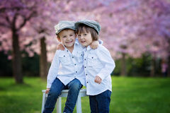 Two adorable boys in a cherry blossom garden in spring afternoon Royalty Free Stock Image