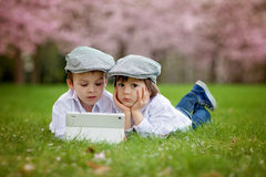 Two adorable boys in a cherry blossom garden in spring afternoon Stock Photo