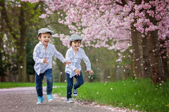 Two adorable boys in a cherry blossom garden in spring afternoon Stock Photos