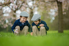 Two adorable boys, reading a book in a spring blooming park. Daytime Stock Images