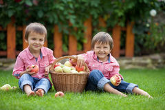 Two adorable boys, sitting on the grass, eating apples Stock Photos