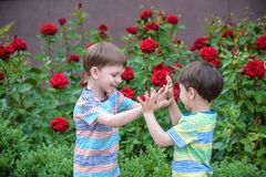 Two adorable brothers kids boys playing outdoors together Stock Photography