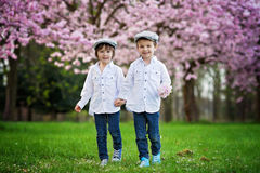 Two adorable caucasian boys in a blooming cherry tree garden, sp Royalty Free Stock Image