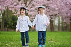 Two adorable caucasian boys in a blooming cherry tree garden, sp Stock Photography