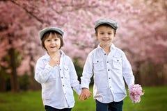 Two adorable caucasian boys in a blooming cherry tree garden, sp Stock Photos