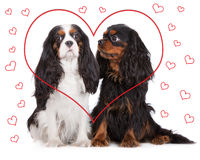 Two adorable dogs with drawn hearts Stock Photo