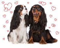 Two adorable dogs with drawn hearts Stock Photography
