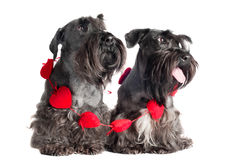 Two adorable dogs with hearts around them Stock Photography