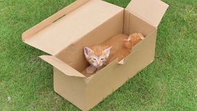 Two adorable ginger kittens in box on meadows, one is sleeping, one is looking at camera, lovely pets, 4k footage, slow motion.  stock video footage
