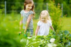 Two adorable girls watering plants and flowers Stock Images