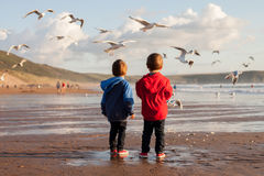 Two adorable kids, feeding the seagulls on the beach. Sunset time Royalty Free Stock Photo