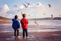 Two adorable kids, feeding the seagulls on the beach Stock Images