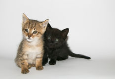 Two adorable kitten isolated on white Royalty Free Stock Photo