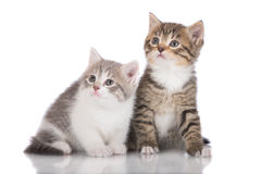 Two adorable kittens Stock Photo