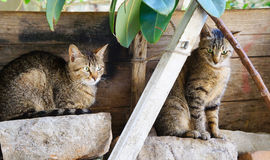 Two adorable kitties sitting on rocks outdoors Stock Image