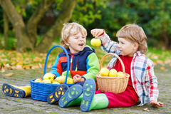 Two adorable little boy friends eating apples in home's garden, Stock Images