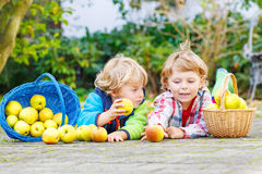 Two adorable little children eating apples in home's garden, out Royalty Free Stock Images