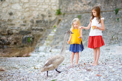 Two adorable little girls feeding young swan on a pebble beach Stock Photo