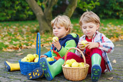 Two adorable little kid boys eating apples in home's garden, out Royalty Free Stock Images