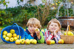 Two adorable little sibling kids eating apples in home's garden, Stock Images