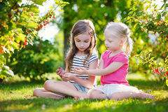 Two adorable little sisters picking red currants Royalty Free Stock Images