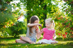 Two adorable little sisters picking red currants Stock Photography