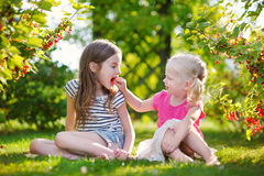 Two adorable little sisters picking red currants Royalty Free Stock Image