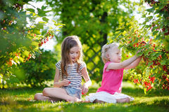 Two adorable little sisters picking red currants Stock Image