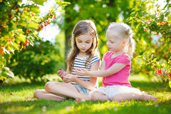 Two adorable little sisters picking red currants in a garden Royalty Free Stock Images
