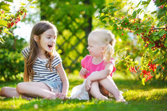 Two adorable little sisters picking red currants in a garden Royalty Free Stock Image