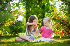 Two adorable little sisters picking red currants in a garden Royalty Free Stock Photography
