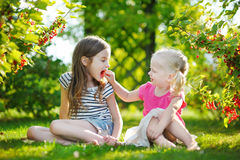 Two adorable little sisters picking red currants in a garden Stock Image