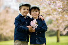 Two adorable preschool children, boy brothers, playing with litt. Le chicks in a cherry blossom garden Royalty Free Stock Image