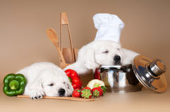 Two adorable puppies asleep while cooking. Two golden retriever puppies asleep Stock Photo