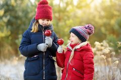 Two adorable sisters eating red apples covered with sugar icing on beautiful sunny Christmas day. Children enjoying sweets, candies and gingerbread on magical stock images