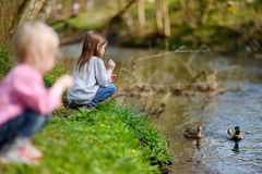 Two adorable sisters feeding ducks by a river Stock Image