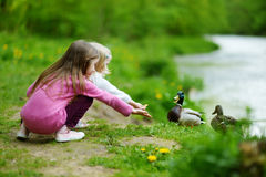 Two adorable sisters feeding ducks by a river Stock Photography