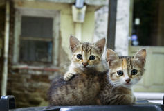 Two adorable young cats Royalty Free Stock Photos